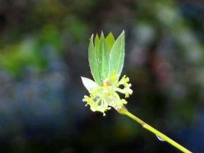 ちいさな庭の小さな自然_e0010418_14223887.jpg