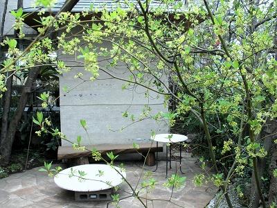 ちいさな庭の小さな自然_e0010418_1423291.jpg
