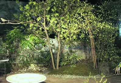 ちいさな庭の小さな自然_e0010418_14233814.jpg