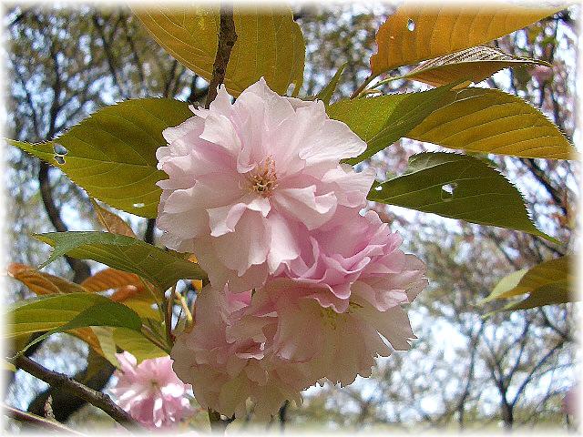 lovely flowers_d0083623_209825.jpg