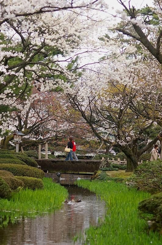 満開の桜・兼六園_d0043136_191263.jpg