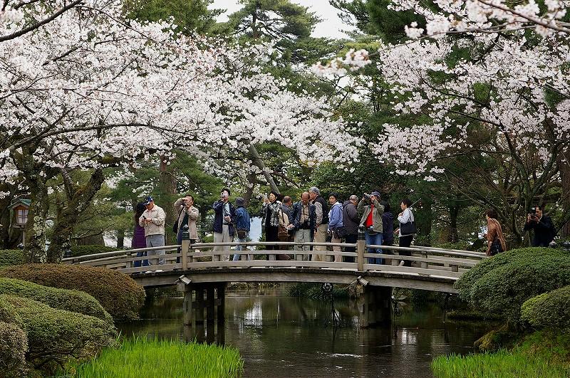 満開の桜・兼六園_d0043136_19205591.jpg