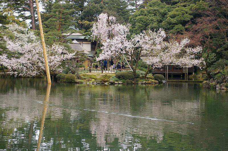 満開の桜・兼六園_d0043136_1981939.jpg