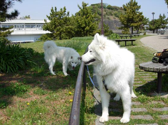 ロング散歩は海の公園・・・_c0035838_6324569.jpg