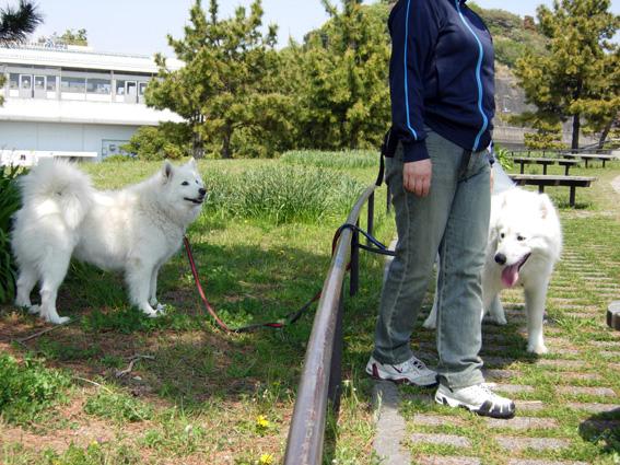 ロング散歩は海の公園・・・_c0035838_6382355.jpg