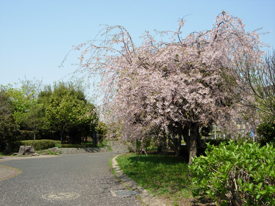 ロング散歩は海の公園・・・_c0035838_6414113.jpg