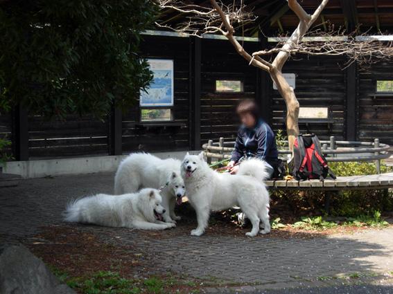 ロング散歩は海の公園・・・_c0035838_644036.jpg