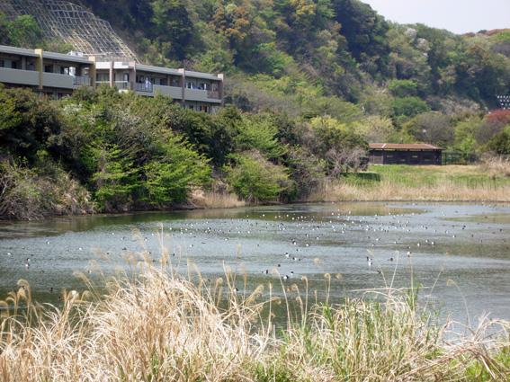 ロング散歩は海の公園・・・_c0035838_650438.jpg