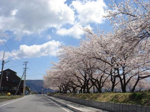 桜通り_a0014840_20543271.jpg