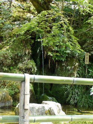 銀閣寺 (かえでの若葉が風に弾んで光ります)_f0012154_14541570.jpg