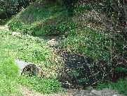 ふかふか小径の階段補修・・・定例活動日_c0108460_17294267.jpg
