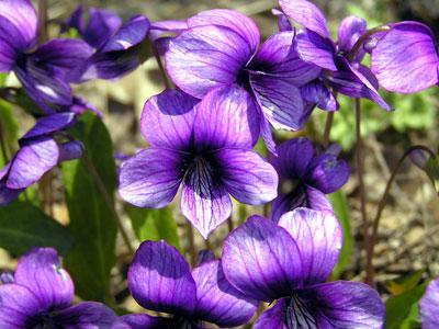 アスファルトに咲く花のぉように~♪_a0047200_20212710.jpg