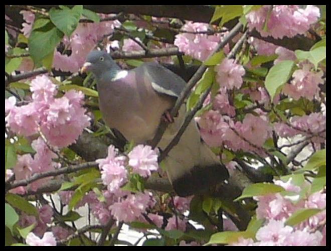 ■公園の鳥たち(パリ)_a0008105_422073.jpg