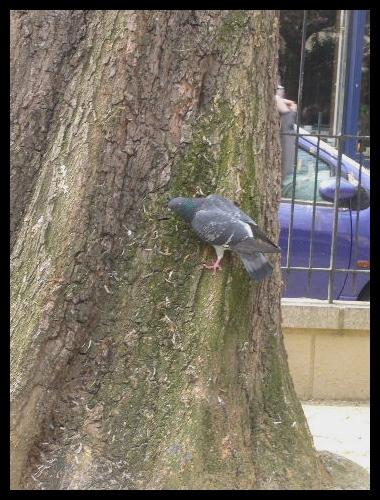 ■公園の鳥たち(パリ)_a0008105_423233.jpg