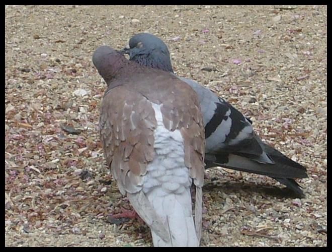 ■公園の鳥たち(パリ)_a0008105_42710.jpg