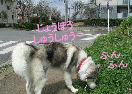 f0112407_17113217.jpg