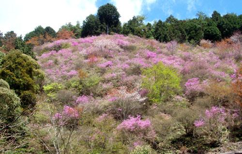 京都一周トレイル 4_e0048413_21295165.jpg