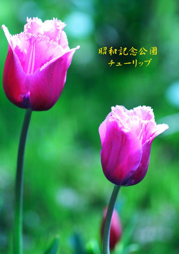 f0035323_257151.jpg