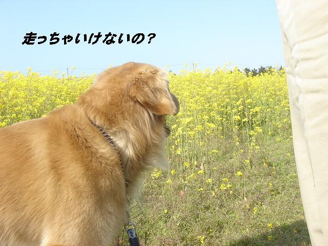 f0114128_17505137.jpg