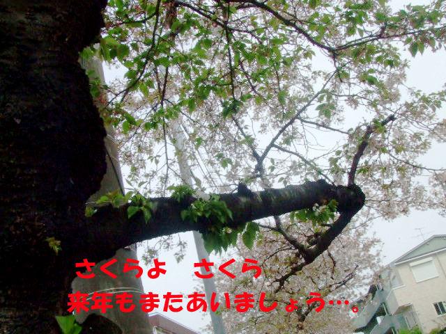 f0059334_9321717.jpg