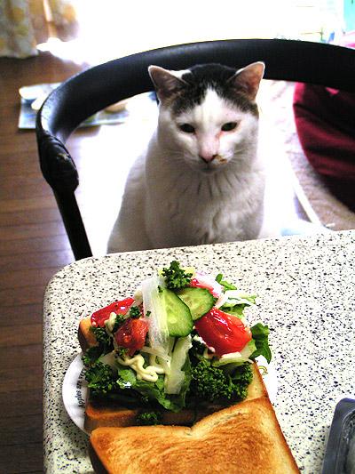 美味しそうな野菜サンド_a0028451_1246580.jpg