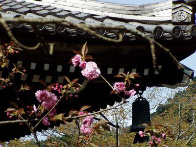 南禅寺 (立派な三門。初めて見た様に感心しました。)_f0012154_19102460.jpg