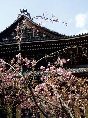 南禅寺 (立派な三門。初めて見た様に感心しました。)_f0012154_199030.jpg