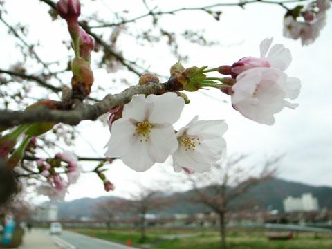 開花はしたものの・・・_e0084756_19511475.jpg