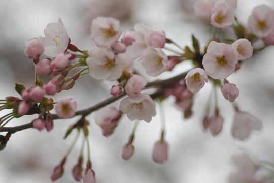 開花はしたものの・・・_e0084756_19575653.jpg