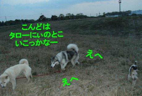 f0112407_1511558.jpg
