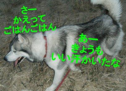 f0112407_1512689.jpg