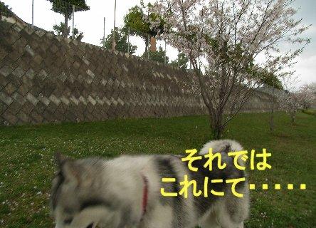 f0112407_215469.jpg