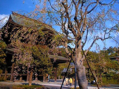 鎌倉トレイルラン_a0036808_17443865.jpg