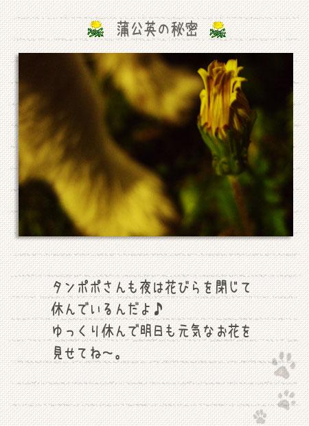b0040323_117129.jpg