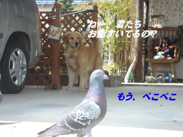 f0114128_8305775.jpg