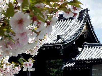 京都御所のさくらは満開 (事前予約しないと見学できません。)_f0012154_1143273.jpg