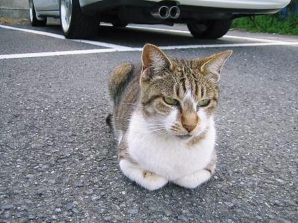 江ノ島の猫 _a0079457_16124685.jpg