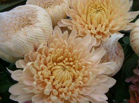 オークリーフ(テーマは春のピンク色!)_f0049672_11464133.jpg