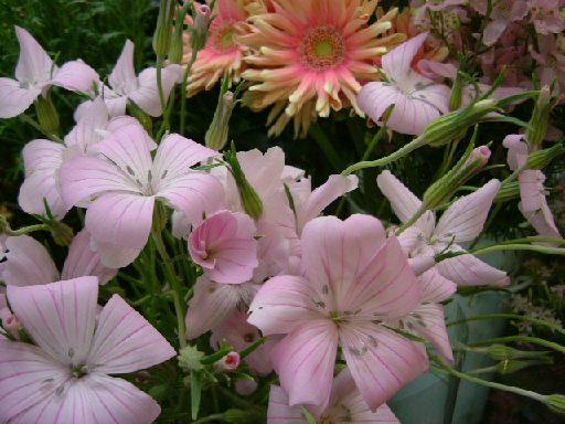 オークリーフ(テーマは春のピンク色!)_f0049672_11473363.jpg