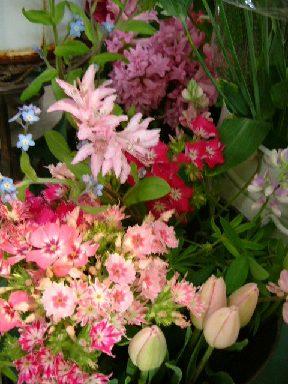 オークリーフ(テーマは春のピンク色!)_f0049672_11482632.jpg