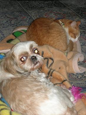 最近の犬猫事情_c0011501_1716172.jpg