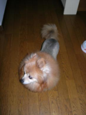 最近の犬猫事情_c0011501_17195645.jpg