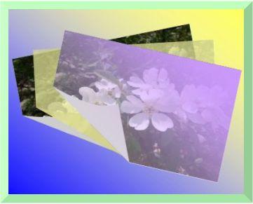 d0048312_20224554.jpg