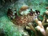 [ダイビング]ウミウシの春_a0043520_23551949.jpg