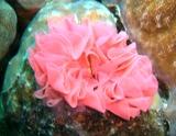 [ダイビング]ウミウシの春_a0043520_2356022.jpg