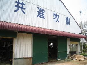 牛舎の入り口、共進牧場と書かれてあり、入り口の脇では、一頭の牛が寝そべってお昼ね中です。