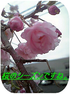 e0046477_16101242.jpg