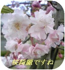 e0046477_1684893.jpg