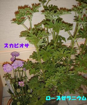 f0110199_21193273.jpg