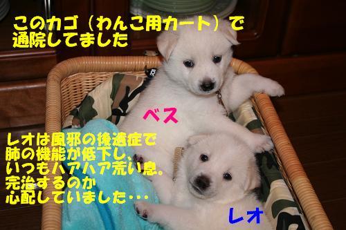 f0121712_16414026.jpg